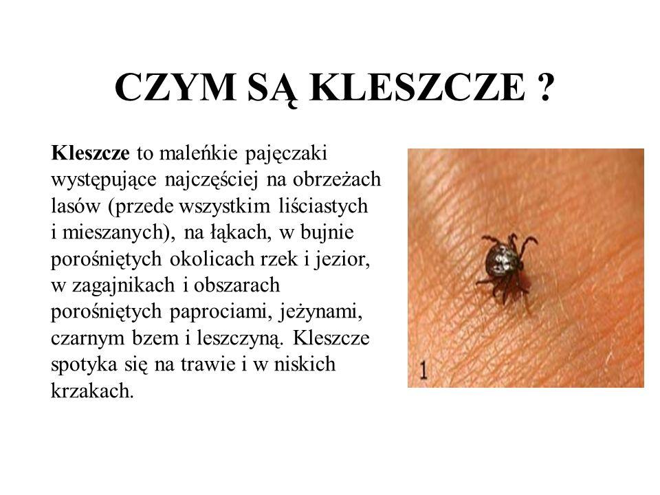 CZYM SĄ KLESZCZE ? Kleszcze to maleńkie pajęczaki występujące najczęściej na obrzeżach lasów (przede wszystkim liściastych i mieszanych), na łąkach, w