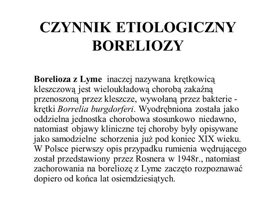 CZYNNIK ETIOLOGICZNY BORELIOZY Borelioza z Lyme inaczej nazywana krętkowicą kleszczową jest wieloukładową chorobą zakaźną przenoszoną przez kleszcze,