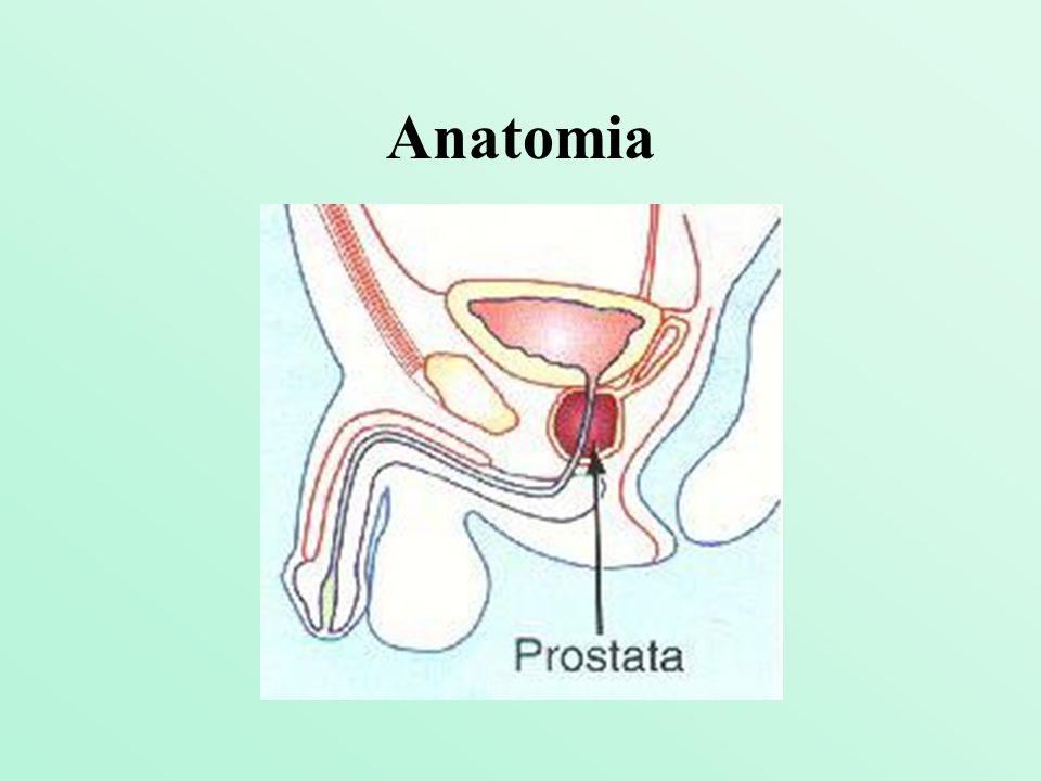 Prostata, czyli gruczoł krokowy, znajduje się bezpośrednio pod pęcherzem moczowym.