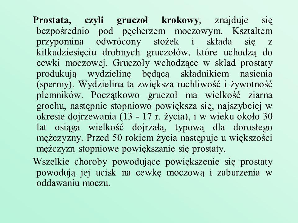 Prostata, czyli gruczoł krokowy, znajduje się bezpośrednio pod pęcherzem moczowym. Kształtem przypomina odwrócony stożek i składa się z kilkudziesięci