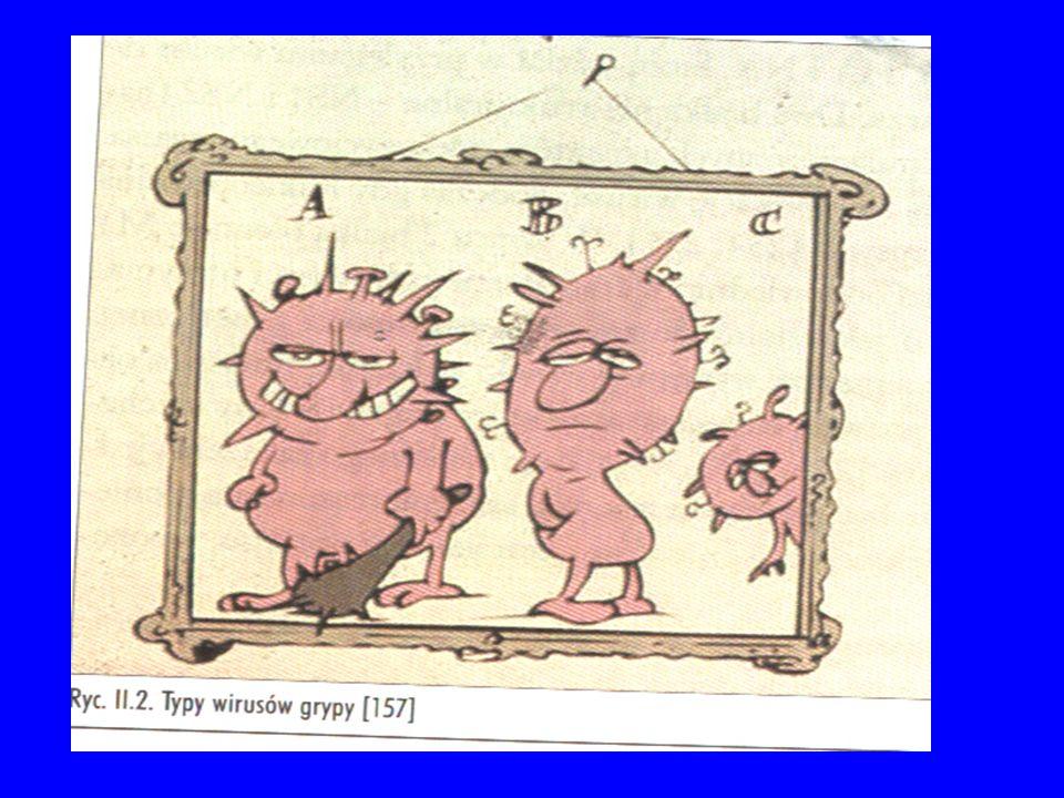Charakterystyczne dla wirusa grypy białka powierzchniowe to: Hemaglutynina (HA/H) – umożliwia przyczepianie sięi wnikanie wirusa do komórek nabłonkowych dróg oddechowych i następnie namnażanie Neuraminidaza (NA/N) – odpowiada za uwalnianie się nowo namnożonych wirusów z komórek U człowieka stwierdza się przede wszystkim trzy podtypy wirusa A: H1N1, H2N2 oraz H3N2 Sporadycznie obserwuje się także zakażenia wywołane innymi podtypami wirusa, między innymi H5N1.