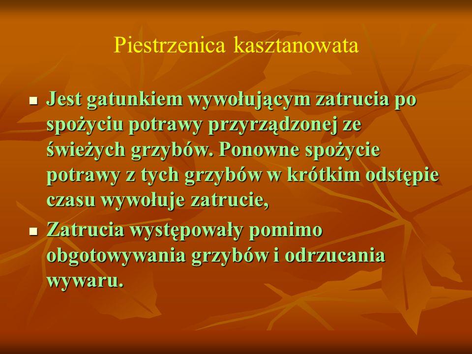 Piestrzenica kasztanowata Jest gatunkiem wywołującym zatrucia po spożyciu potrawy przyrządzonej ze świeżych grzybów. Ponowne spożycie potrawy z tych g