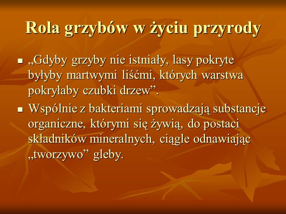 GRZYBOWE ŚWIĘTO Grzybowe święto zaczyna się w sierpniu i trwa w pełni do końca września – pierwszej połowy października - kończy się powoli wraz z nastaniem pierwszych mrozów
