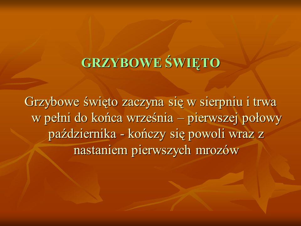 GRZYBOWE ŚWIĘTO Grzybowe święto zaczyna się w sierpniu i trwa w pełni do końca września – pierwszej połowy października - kończy się powoli wraz z nas
