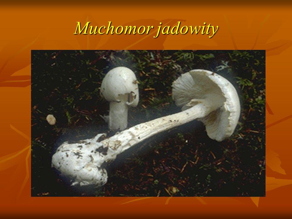 Muchomor jadowity