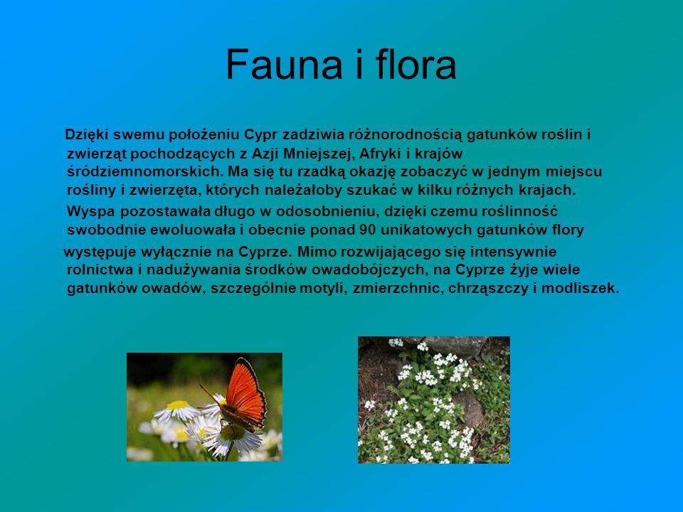 Fauna i flora Dzięki swemu położeniu Cypr zadziwia różnorodnością gatunków roślin i zwierząt pochodzących z Azji Mniejszej, Afryki i krajów śródziemno