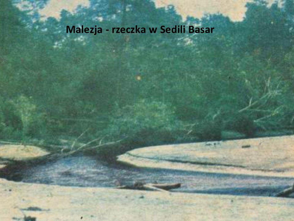 Malezja - rzeczka w Sedili Basar