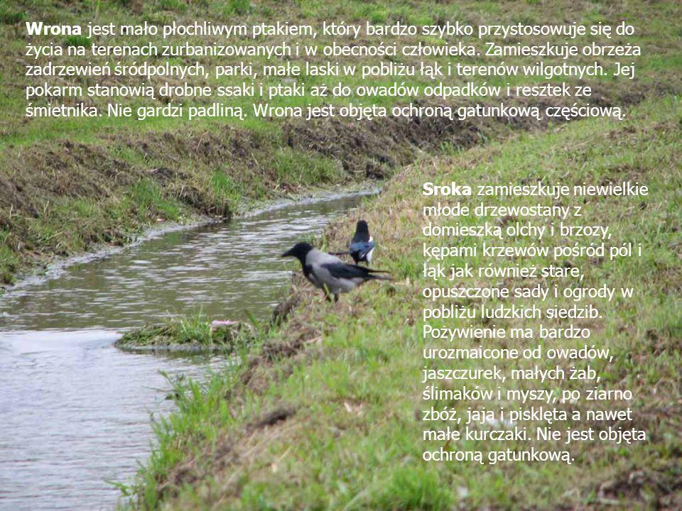 Lin występuje przeważnie w wolno płynących rzekach oraz płytkich, nagrzewających się jeziorach i stawach o mulistym dnie, gęsto porośniętym podwodną roślinnością.