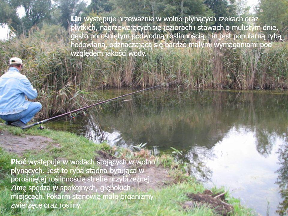 Lin występuje przeważnie w wolno płynących rzekach oraz płytkich, nagrzewających się jeziorach i stawach o mulistym dnie, gęsto porośniętym podwodną r