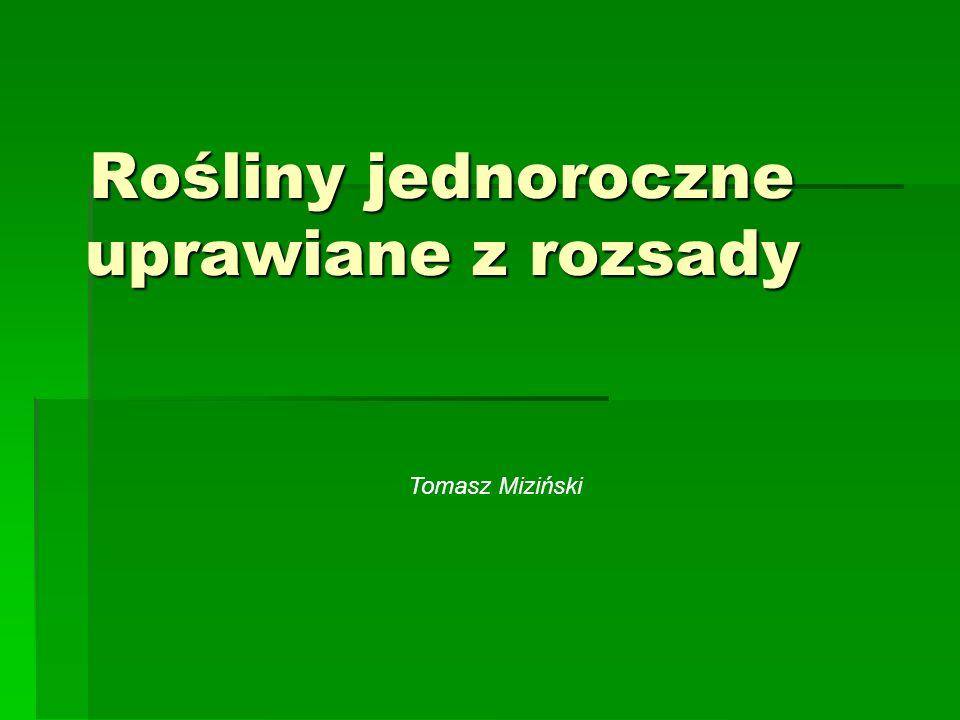 Rośliny jednoroczne uprawiane z rozsady Tomasz Miziński