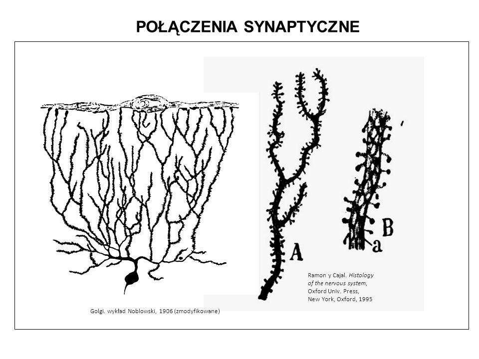 POŁĄCZENIA SYNAPTYCZNE Ramon y Cajal. Histology of the nervous system, Oxford Univ. Press, New York, Oxford, 1995 Golgi. wykład Noblowski, 1906 (zmody