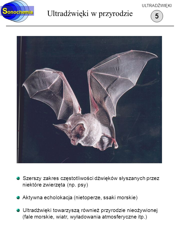 Wytwarzanie ultradźwięków 6 S onochemia ULTRADŹWIĘKI Piszczałka Galtona (1883) Możliwość regulacji częstotliwości Tylko do około 30 kHz Niewielkie natężenie dźwięku Syrena Możliwość regulacji częstotliwości Duże natężenie dźwięku Działa w gazach i w cieczach Gwizdek wodny Brak regulacji częstotliwości Prosta budowa, brak ruchomych części Stosowany do wytwarzania emulsji i do homogenizacji