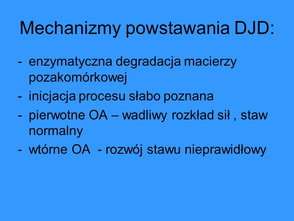 Budowa chrząstki stawowej: 1.chondrocyty 2.
