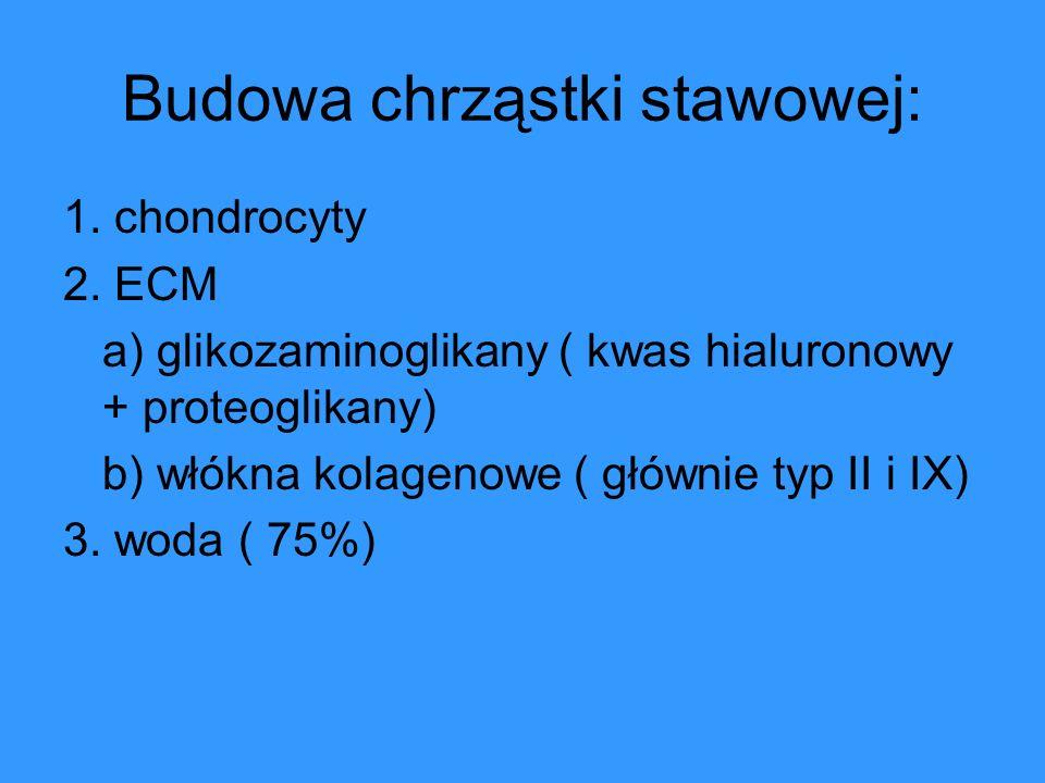 Budowa chrząstki stawowej: 1. chondrocyty 2. ECM a) glikozaminoglikany ( kwas hialuronowy + proteoglikany) b) włókna kolagenowe ( głównie typ II i IX)