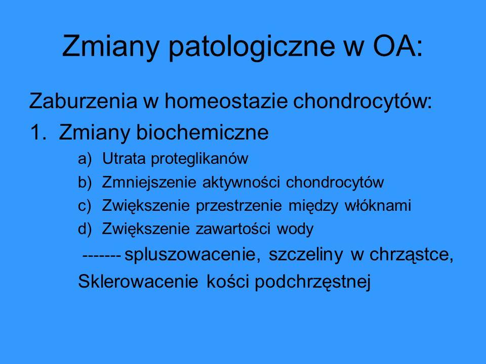 Zmiany patologiczne w OA: Zaburzenia w homeostazie chondrocytów: 1. Zmiany biochemiczne a)Utrata proteglikanów b)Zmniejszenie aktywności chondrocytów