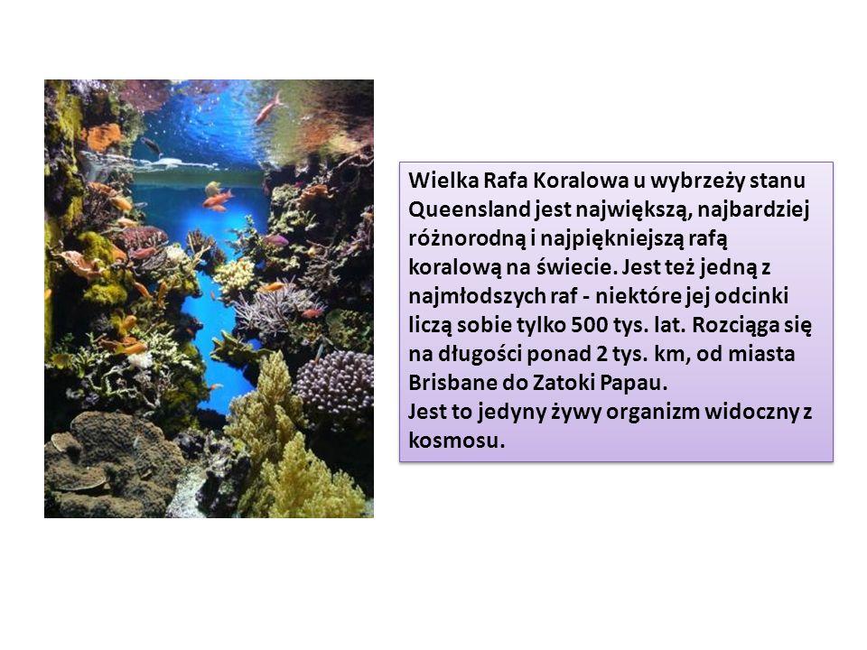 Wielka Rafa Koralowa u wybrzeży stanu Queensland jest największą, najbardziej różnorodną i najpiękniejszą rafą koralową na świecie. Jest też jedną z n