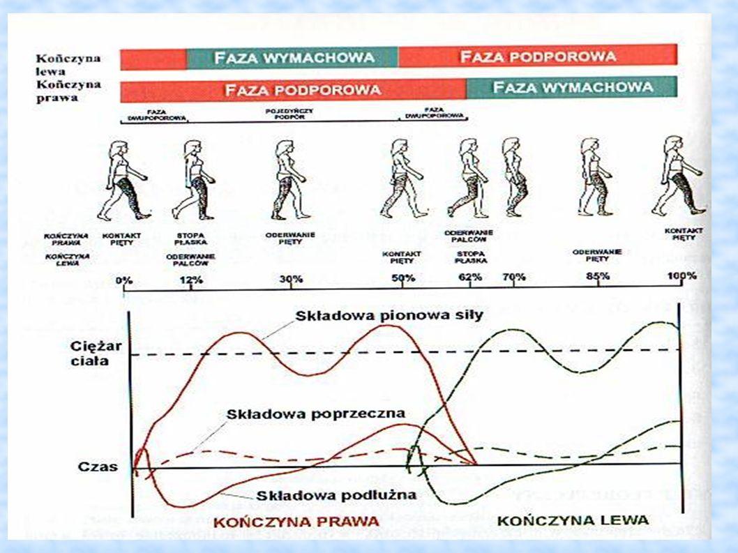 Dlaczego stopy? Faza podporowa stanowi 68% całego chodu człowieka!!!