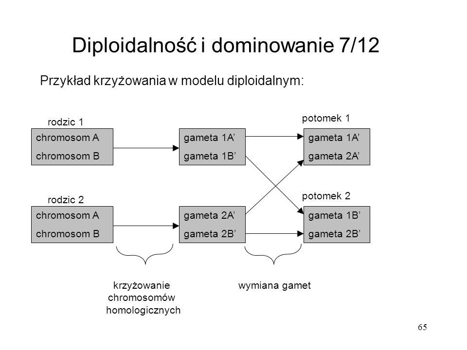 65 Przykład krzyżowania w modelu diploidalnym: Diploidalność i dominowanie 7/12 chromosom A chromosom B chromosom A chromosom B gameta 1A gameta 1B ga