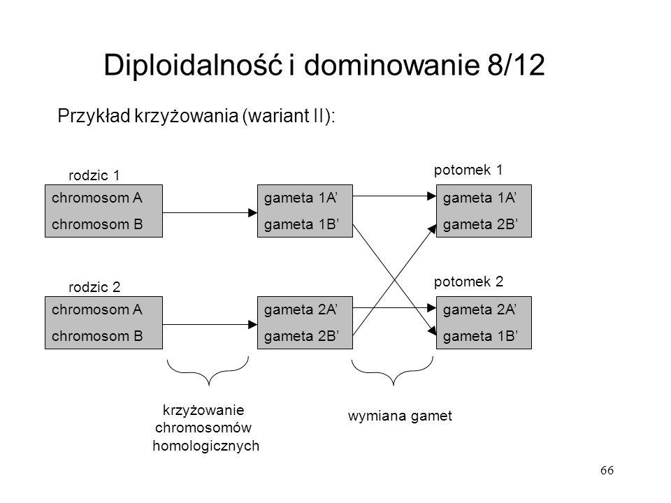 66 Przykład krzyżowania (wariant II): Diploidalność i dominowanie 8/12 chromosom A chromosom B chromosom A chromosom B gameta 1A gameta 1B gameta 2A g