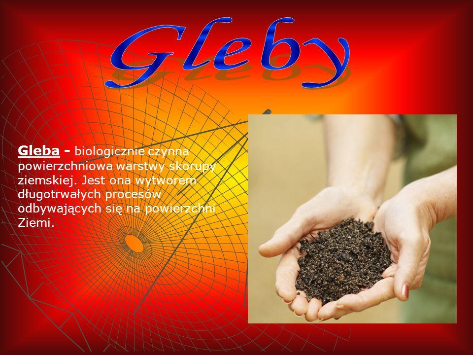 Gleba - biologicznie czynna powierzchniowa warstwy skorupy ziemskiej. Jest ona wytworem długotrwałych procesów odbywających się na powierzchni Ziemi.