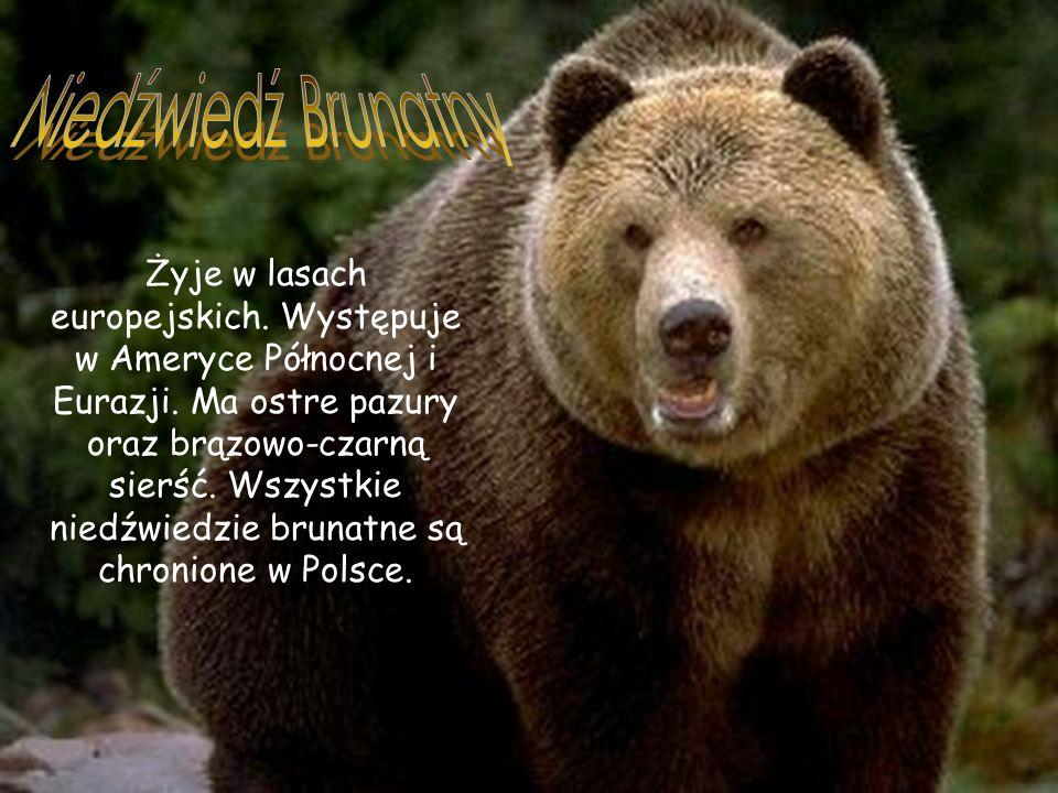 Żyje w lasach europejskich.Występuje w Ameryce Północnej i Eurazji.