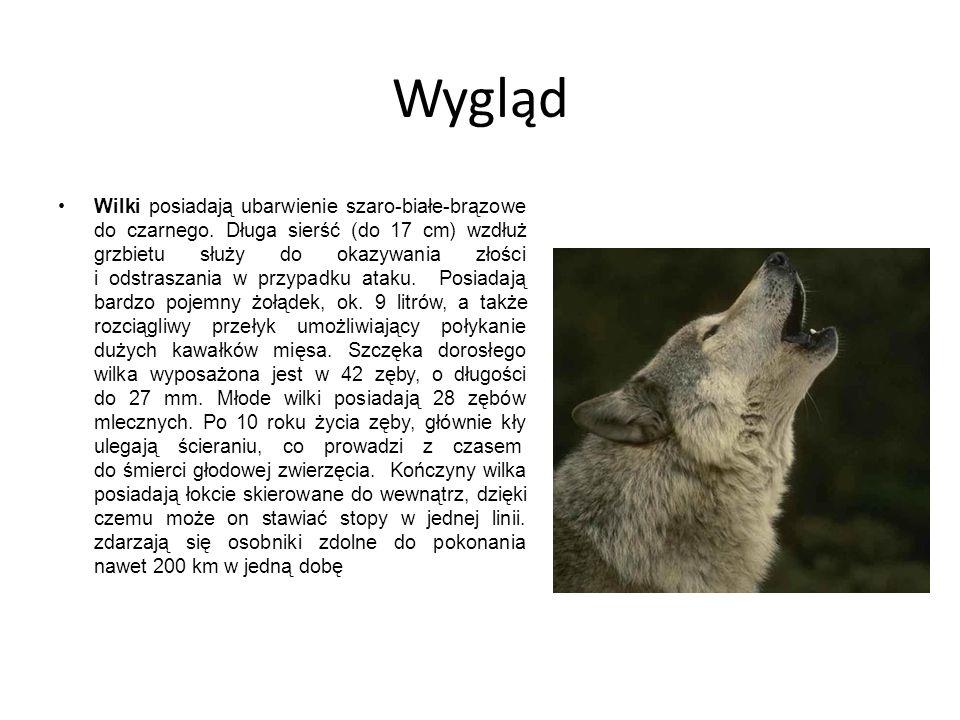 Wygląd Wilki posiadają ubarwienie szaro-białe-brązowe do czarnego. Długa sierść (do 17 cm) wzdłuż grzbietu służy do okazywania złości i odstraszania w