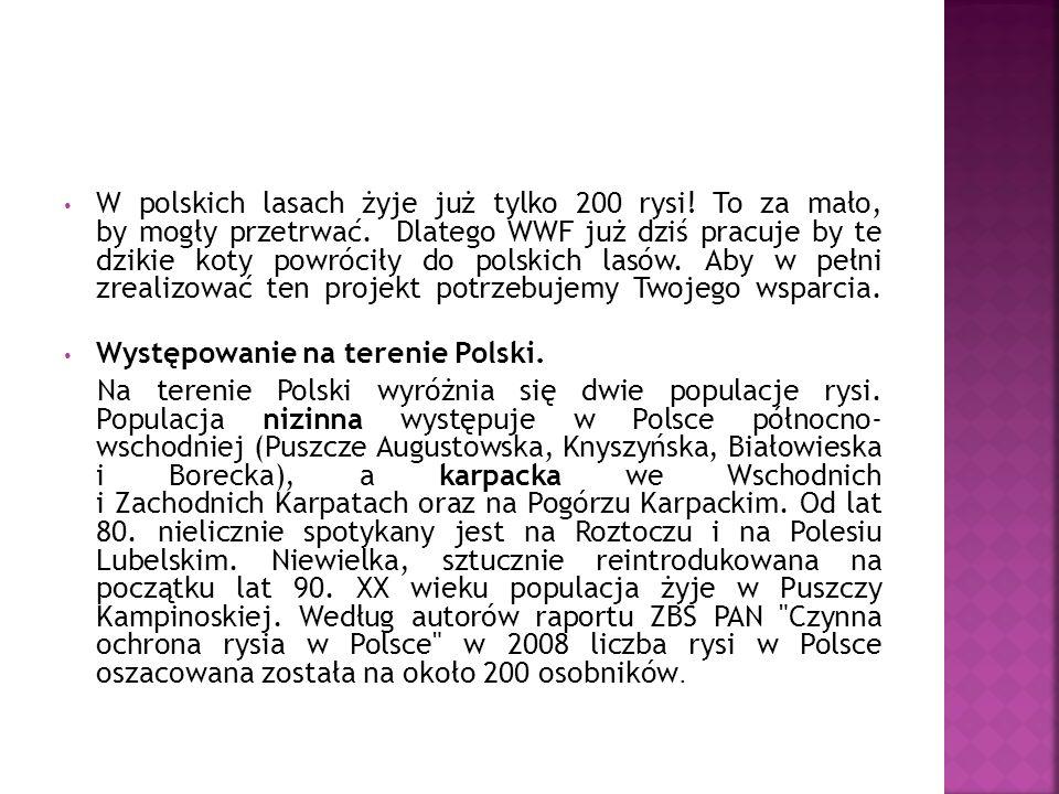 W polskich lasach żyje już tylko 200 rysi.To za mało, by mogły przetrwać.
