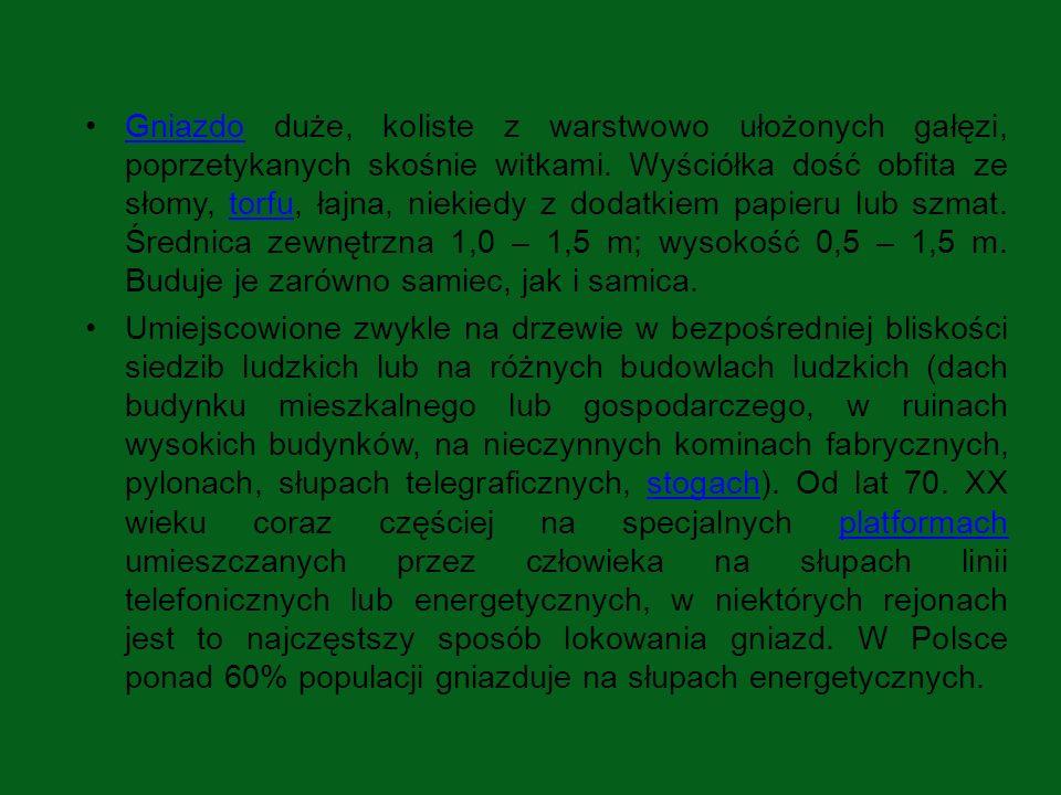 Jaja Bocianów… Różnobiegunowe, bardzo mało wydłużone, raczej pękate o barwie białej, lekko przybrudzonej o tępym węższym biegunie.