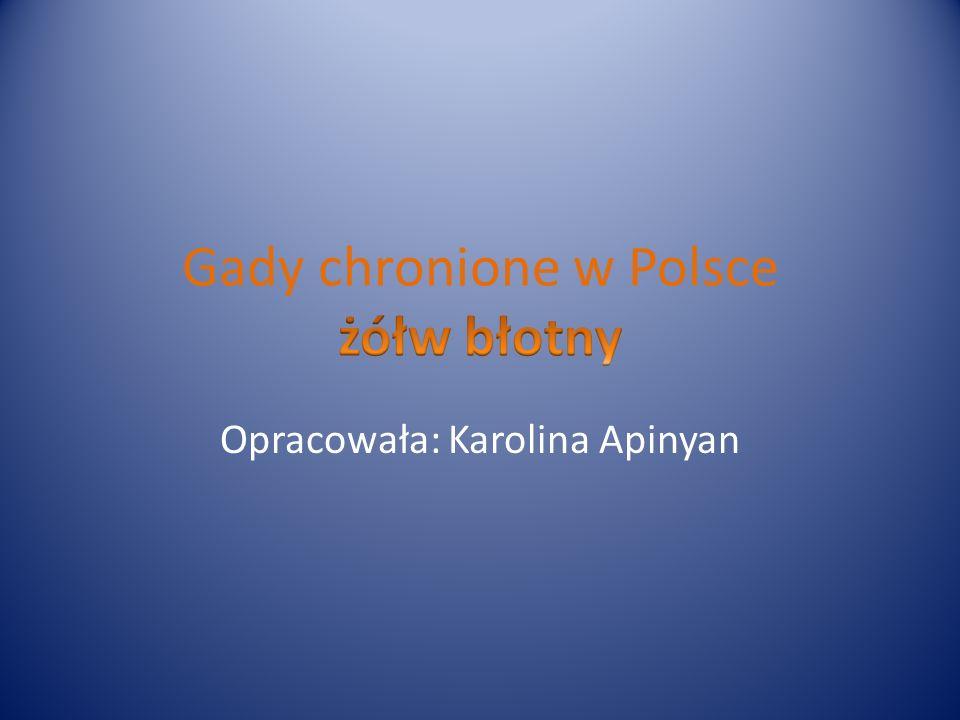 Opracowała: Karolina Apinyan