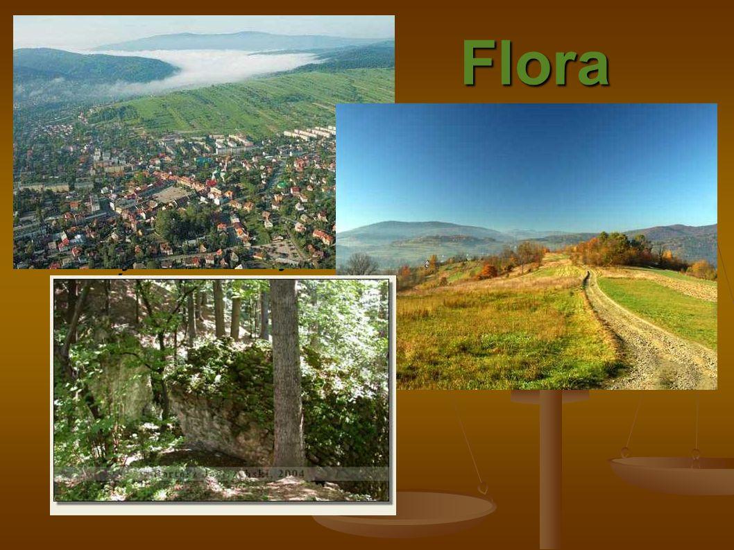 Flora Powiat myślenicki położony jest na granicy dwóch podokręgów geobotanicznych. Występuje tutaj piętrowy układ roślinności, wszystkie rośliny które