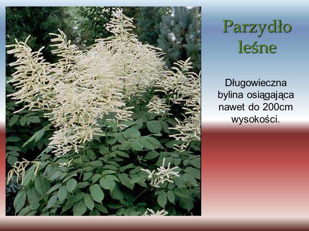 Parzydło leśne Długowieczna bylina osiągająca nawet do 200cm wysokości.