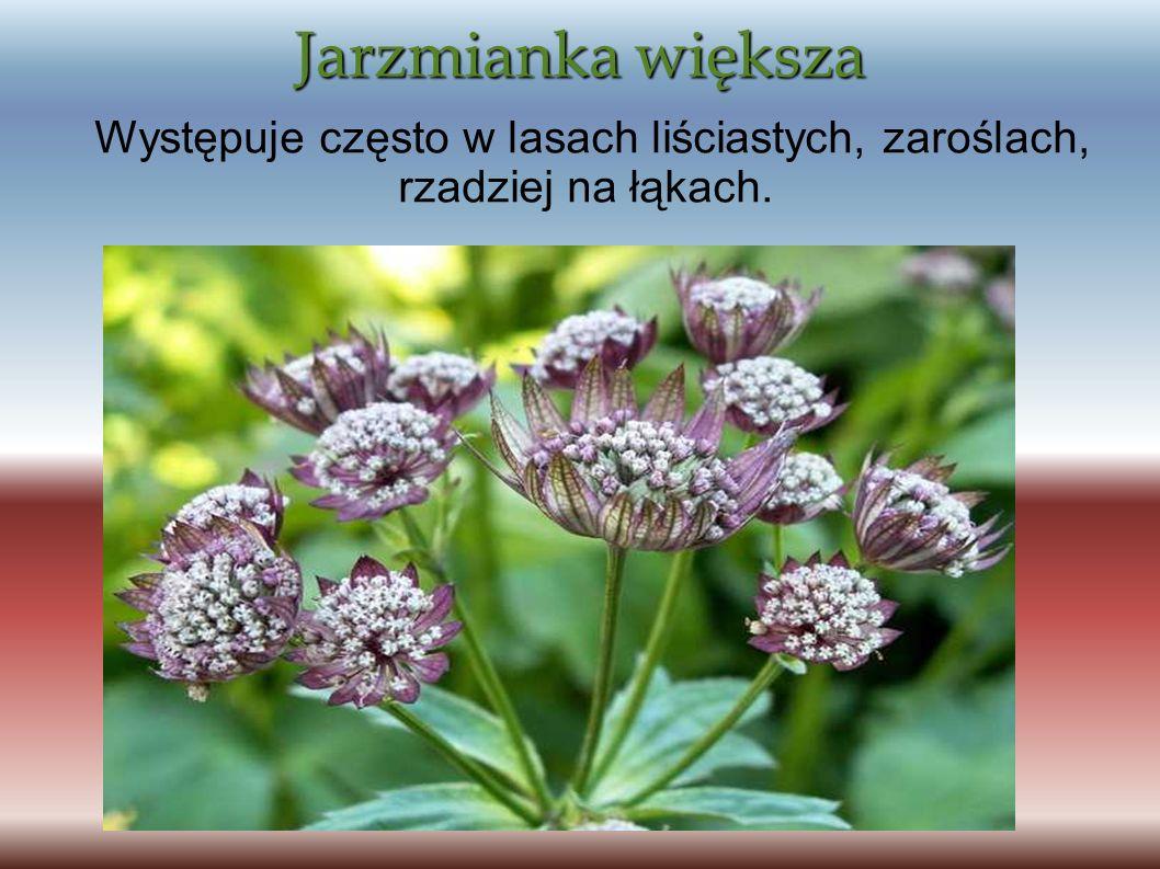 Jarzmianka większa Występuje często w lasach liściastych, zaroślach, rzadziej na łąkach.