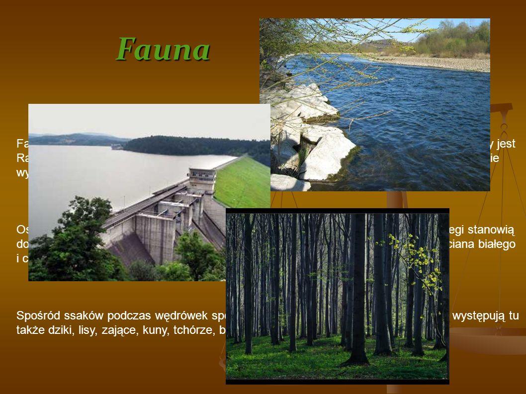 Fauna Fauna regionu zawiera zarówno gatunki górskie, jak i nizinne. Rzeką dość zasobną w ryby jest Raba, na której regularnie urządzane są akcje zaryb