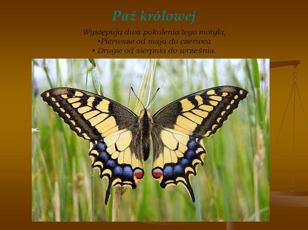 Paź królowej Występują dwa pokolenia tego motyla; Pierwsze od maja do czerwca Drugie od sierpnia do września.