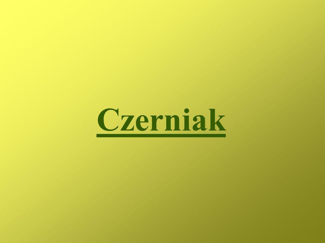 Czerniak