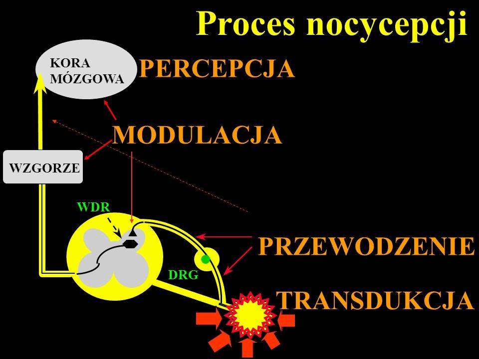 DRG KORA MÓZGOWA Proces nocycepcji WDR WZGORZE TRANSDUKCJA PRZEWODZENIE PERCEPCJA MODULACJA
