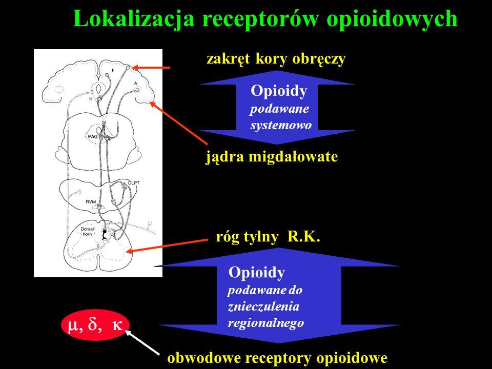 Lokalizacja receptorów opioidowych zakręt kory obręczy jądra migdałowate róg tylny R.K. obwodowe receptory opioidowe Opioidy podawane systemowo Opioid