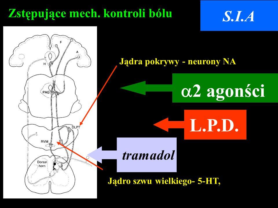 a2 agonści Zstępujące mech. kontroli bólu Jądro szwu wielkiego- 5-HT, Jądra pokrywy - neurony NA S.I.A tramadol L.P.D.