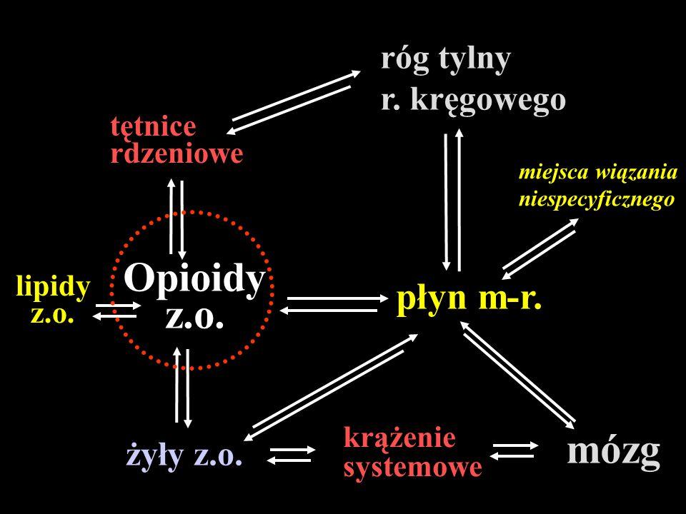 tętnice rdzeniowe róg tylny r. kręgowego lipidy z.o. miejsca wiązania niespecyficznego mózg krążenie systemowe żyły z.o. Opioidy z.o. płyn m-r.