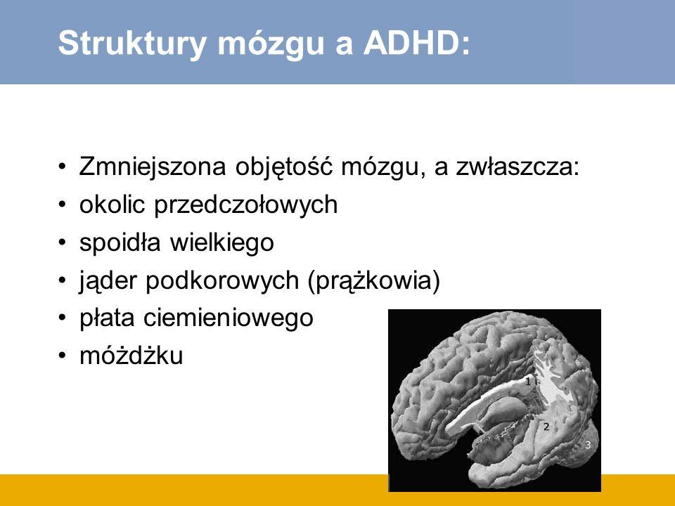 Struktury mózgu a ADHD: Zmniejszona objętość mózgu, a zwłaszcza: okolic przedczołowych spoidła wielkiego jąder podkorowych (prążkowia) płata ciemieniowego móżdżku