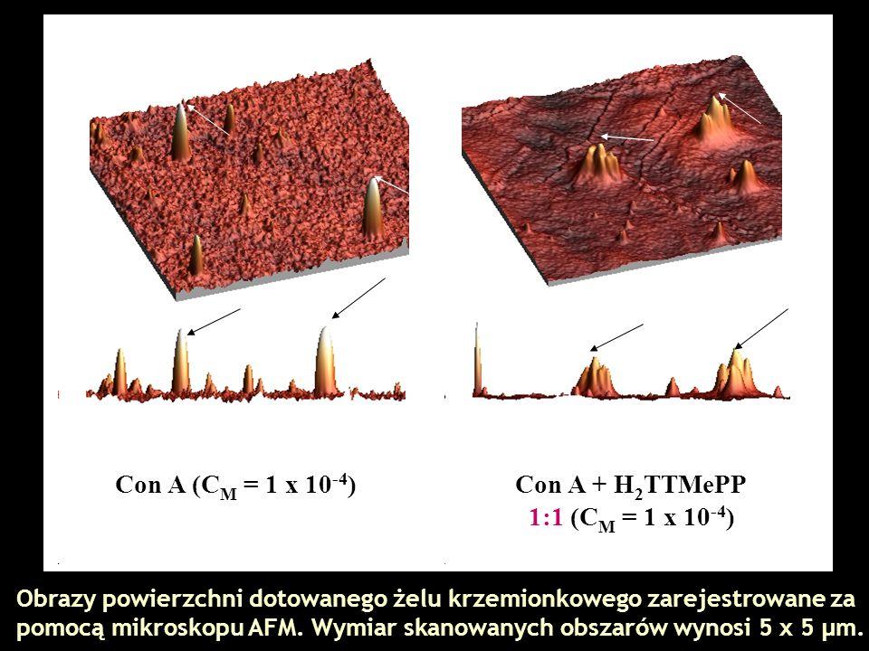 Con A (C M = 1 x 10 -4 )Con A + H 2 TTMePP 1:1 (C M = 1 x 10 -4 ) Obrazy powierzchni dotowanego żelu krzemionkowego zarejestrowane za pomocą mikroskop