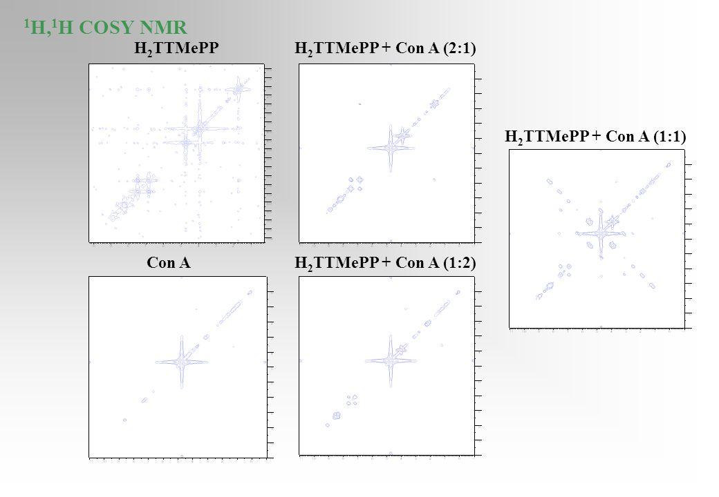 H 2 TTMePP H 2 TTMePP + Con A (1:1) H 2 TTMePP + Con A (2:1) H 2 TTMePP + Con A (1:2)Con A 1 H, 1 H COSY NMR