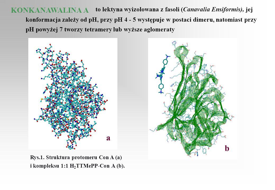 KONKANAWALINA A to lektyna wyizolowana z fasoli (Canavalia Ensiformis), jej konformacja zależy od pH, przy pH 4 - 5 występuje w postaci dimeru, natomi