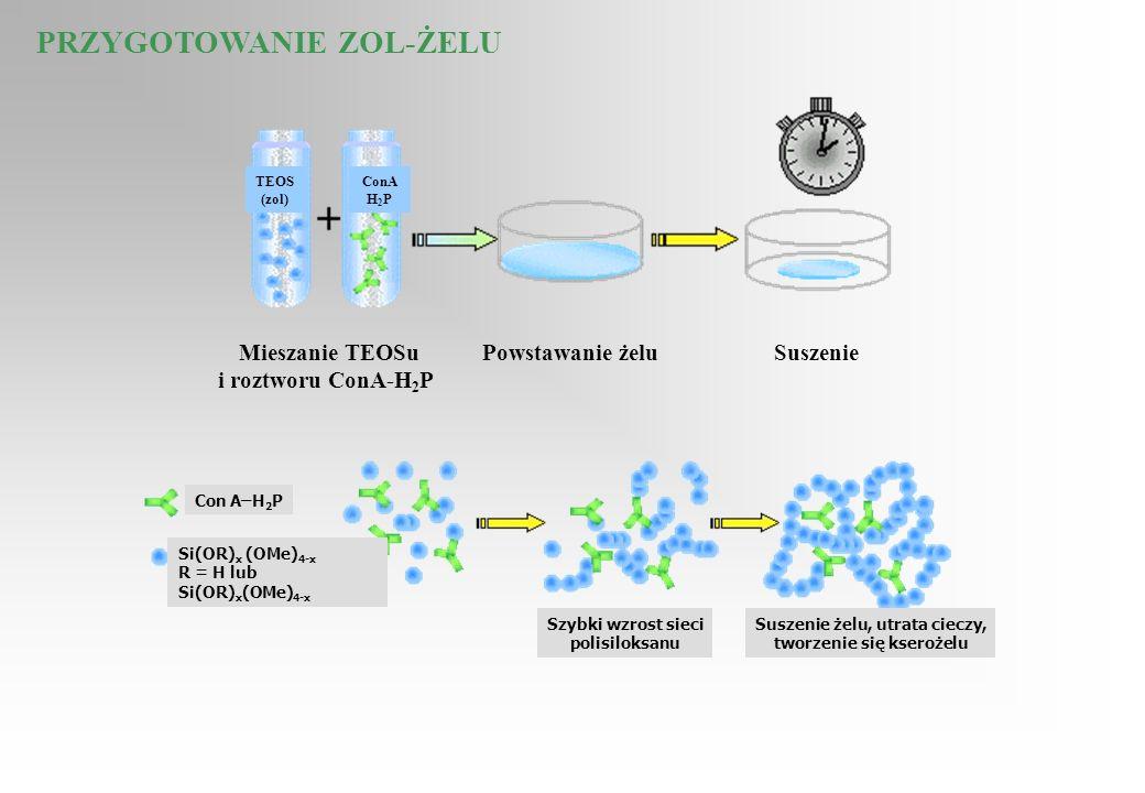 Mieszanie TEOSu i roztworu ConA-H 2 P Powstawanie żeluSuszenie TEOS (zol) ConA H 2 P PRZYGOTOWANIE ZOL-ŻELU Con A–H 2 P Szybki wzrost sieci polisiloks