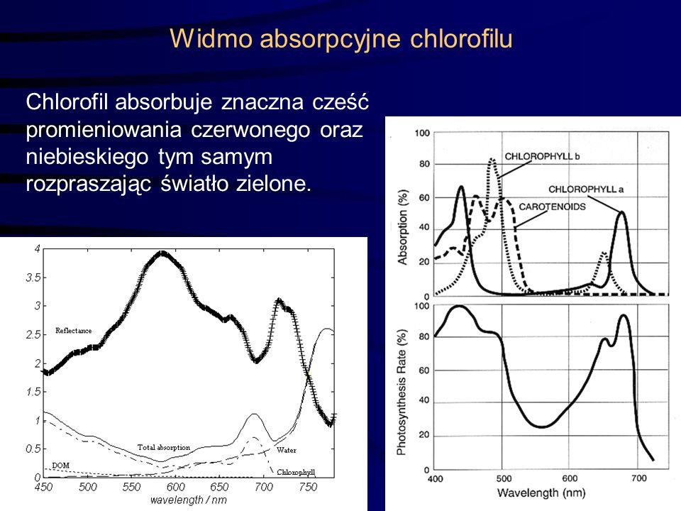 6 Widmo absorpcyjne chlorofilu Chlorofil absorbuje znaczna cześć promieniowania czerwonego oraz niebieskiego tym samym rozpraszając światło zielone.