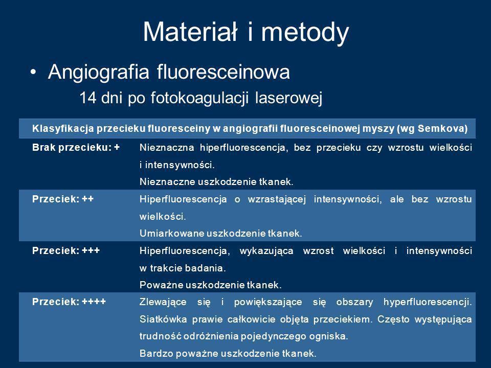 Materiał i metody Angiografia fluoresceinowa 14 dni po fotokoagulacji laserowej Klasyfikacja przecieku fluoresceiny w angiografii fluoresceinowej mysz