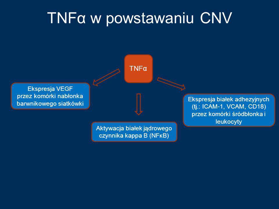 TNFα w powstawaniu CNV TNFα Ekspresja VEGF przez komórki nabłonka barwnikowego siatkówki Ekspresja białek adhezyjnych (tj.: ICAM-1, VCAM, CD18) przez