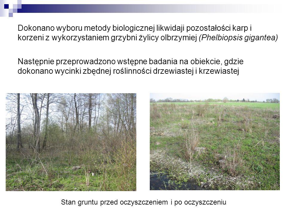 Dokonano wyboru metody biologicznej likwidaji pozostałości karp i korzeni z wykorzystaniem grzybni żylicy olbrzymiej (Phelbiopsis gigantea) Następnie
