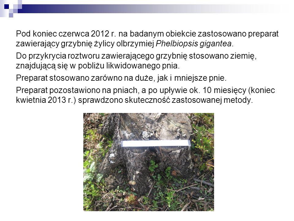 Pod koniec czerwca 2012 r. na badanym obiekcie zastosowano preparat zawierający grzybnię żylicy olbrzymiej Phelbiopsis gigantea. Do przykrycia roztwor