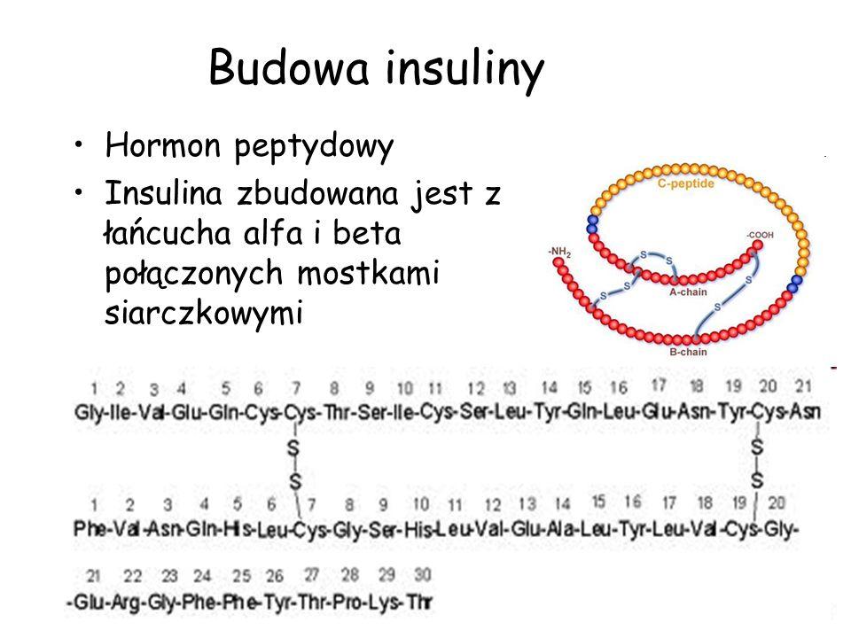Budowa insuliny Hormon peptydowy Insulina zbudowana jest z łańcucha alfa i beta połączonych mostkami siarczkowymi